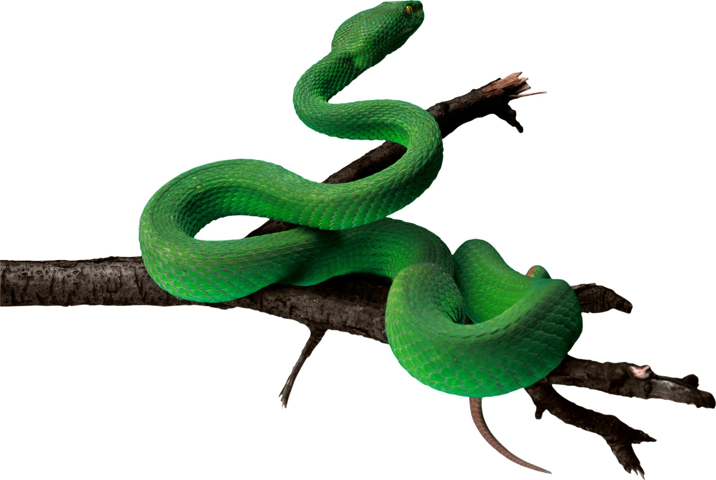 Rainforest Snake Png Snake Anaconda Snake Png Images