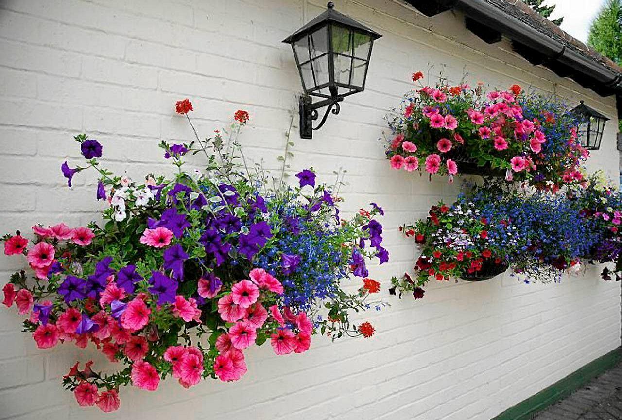 Polowa Maja W Tym Terminie Zazwyczaj Sadzimy Na Balkonach Kwiaty Sezonowe Ktore Beda Tu Rosly Do Jesieni Jaki Vertical Garden Small Gardens Hanging Baskets