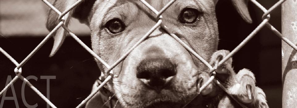 AAVS Action Center Shelter dogs, Animal shelter, Dog