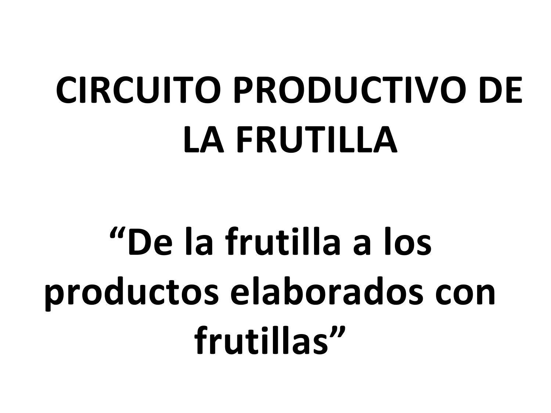 Circuito Productivo : Calaméo circuito productivo del café