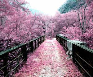 Cherry Blossoms Mit Bildern Fruhling Wallpaper Kirschblute Wallpaper