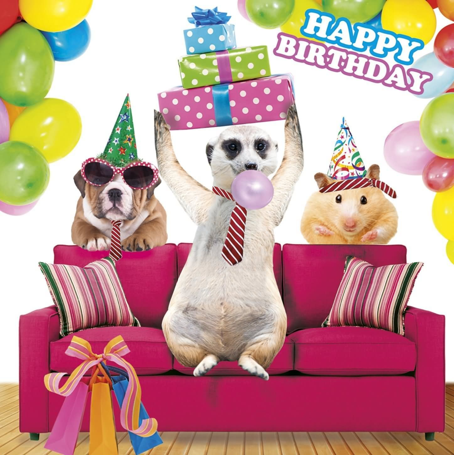 Funny Animals 20 Most Funny Birthday Pictures Funny Animals