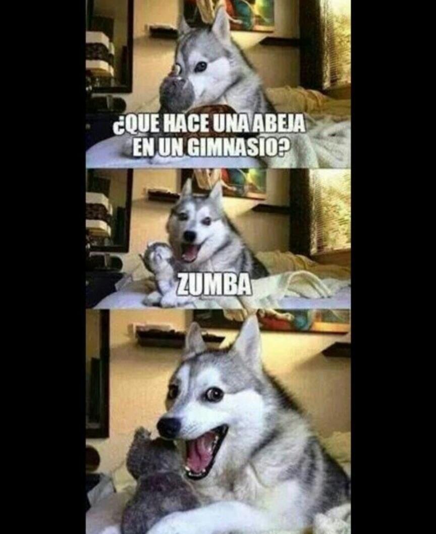 Chiste Memes Divertidos Humor De Perros Chistes Graciosos