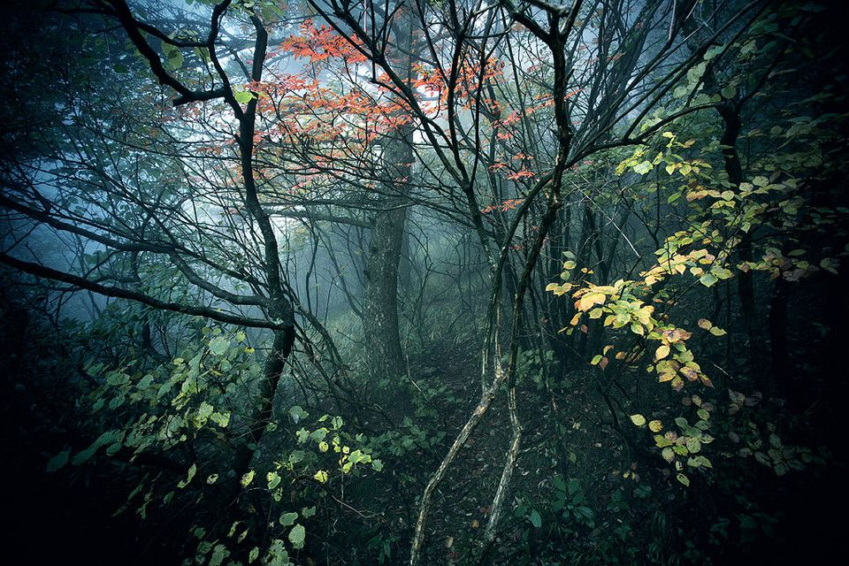 黄山光明顶,浓雾