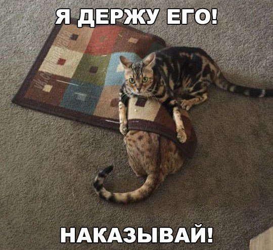 РЖАЧНЫЕ КАРТИНКИ С НАДПИСЯМИ ДО СЛЕЗ | Кошки и котята ...