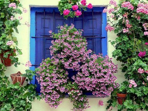 pin de maria jose jimenez ruiz en amor a las flores | pinterest