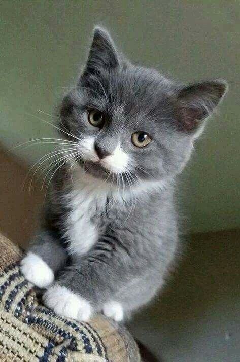 And Finally The Fluffiest Most Curious Kitten In All The Land Kittens Cutest Cute Cats Photos Cute Cats
