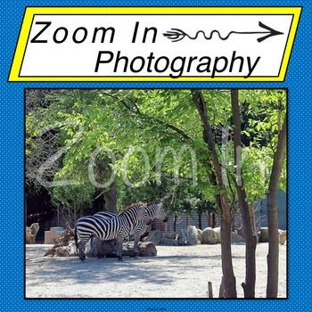 Photo: Zebras by Zoom In Photography | Teachers Pay Teachers