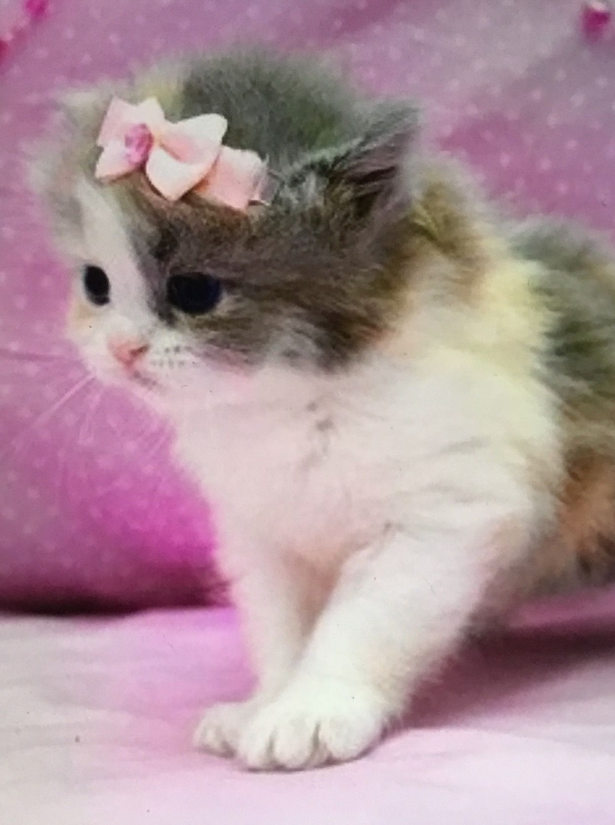 Цветы, живые картинки котята анимация