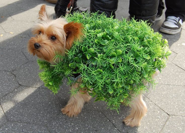 Chia Pet Dog Costume Photo By Juliefinestone On Flickr