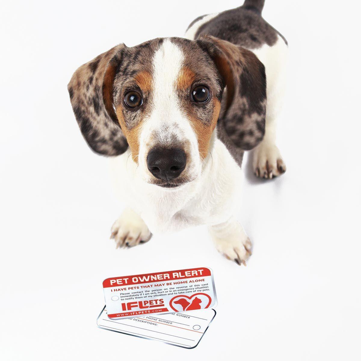 احصل على بطاقة الحيوانات الأليفة المنزلية الخاصة بك In 2020 Baby Animals Super Cute Baby Animals Pictures Cute Animal Photos