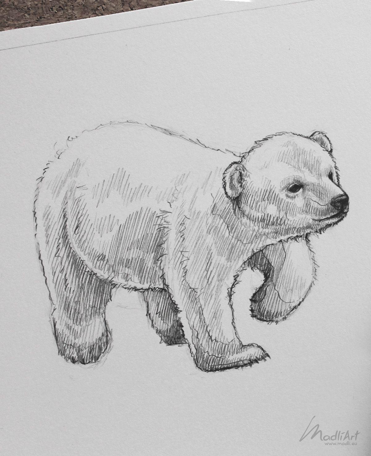 Endangered Animals Drawing : endangered, animals, drawing, Sketchbook, Portfolio, Endangered, Vulnerable, Threatened, Species, Animals, Ideas, Sketches, Penci…, Polar, Drawing,, Sketch