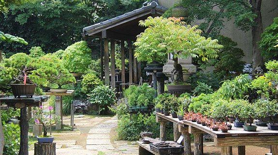 The Omiya Bonsai Village in Saitama City is a tranquil neighborhood ...