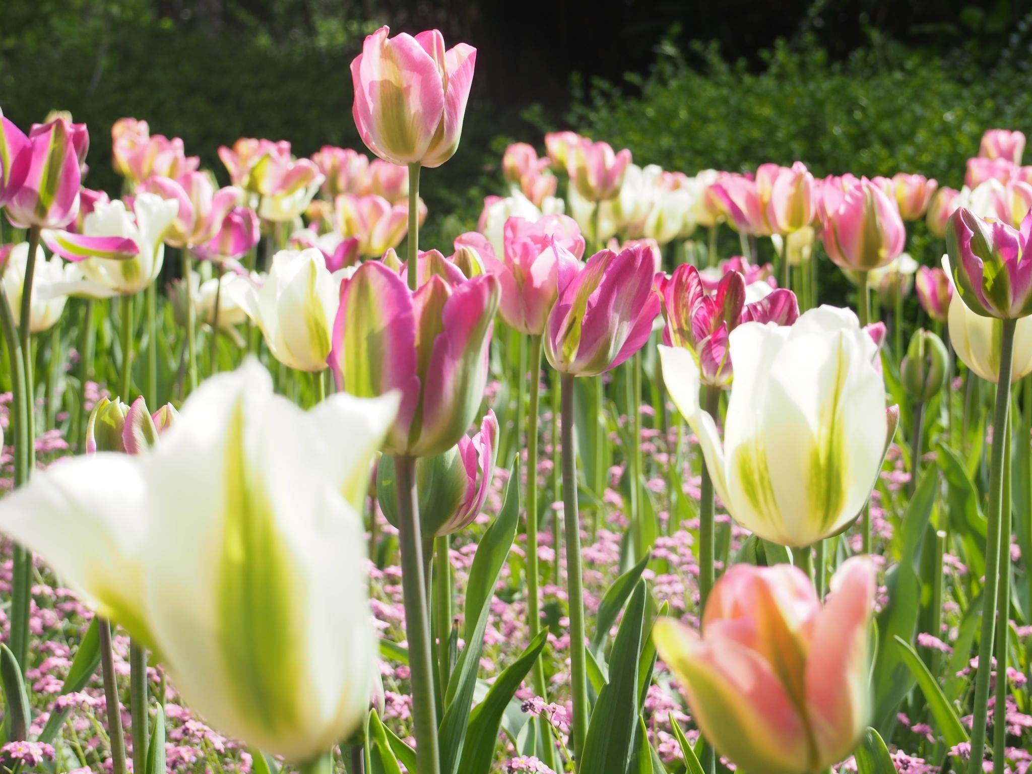Belgian Gardens by Grant Shepherd on 500px