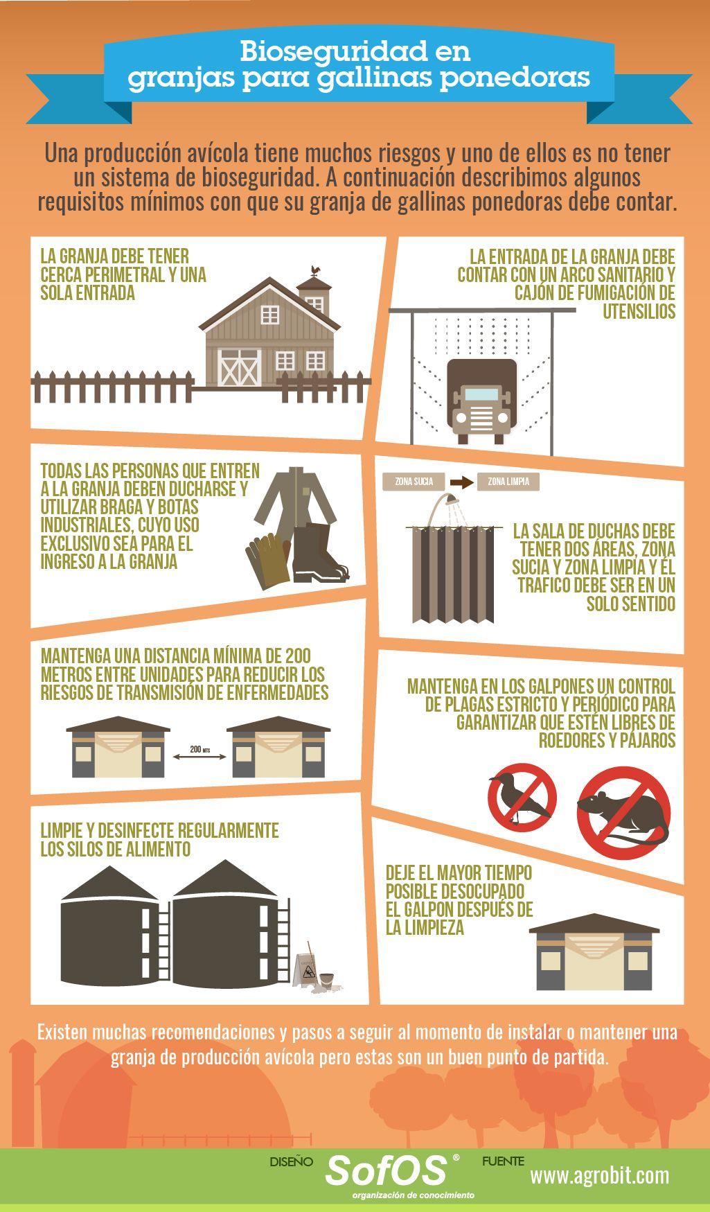 #Infografía #Bioseguridad en #granjas para #gallinas ponedoras #Avícola  #Agro #LATAM