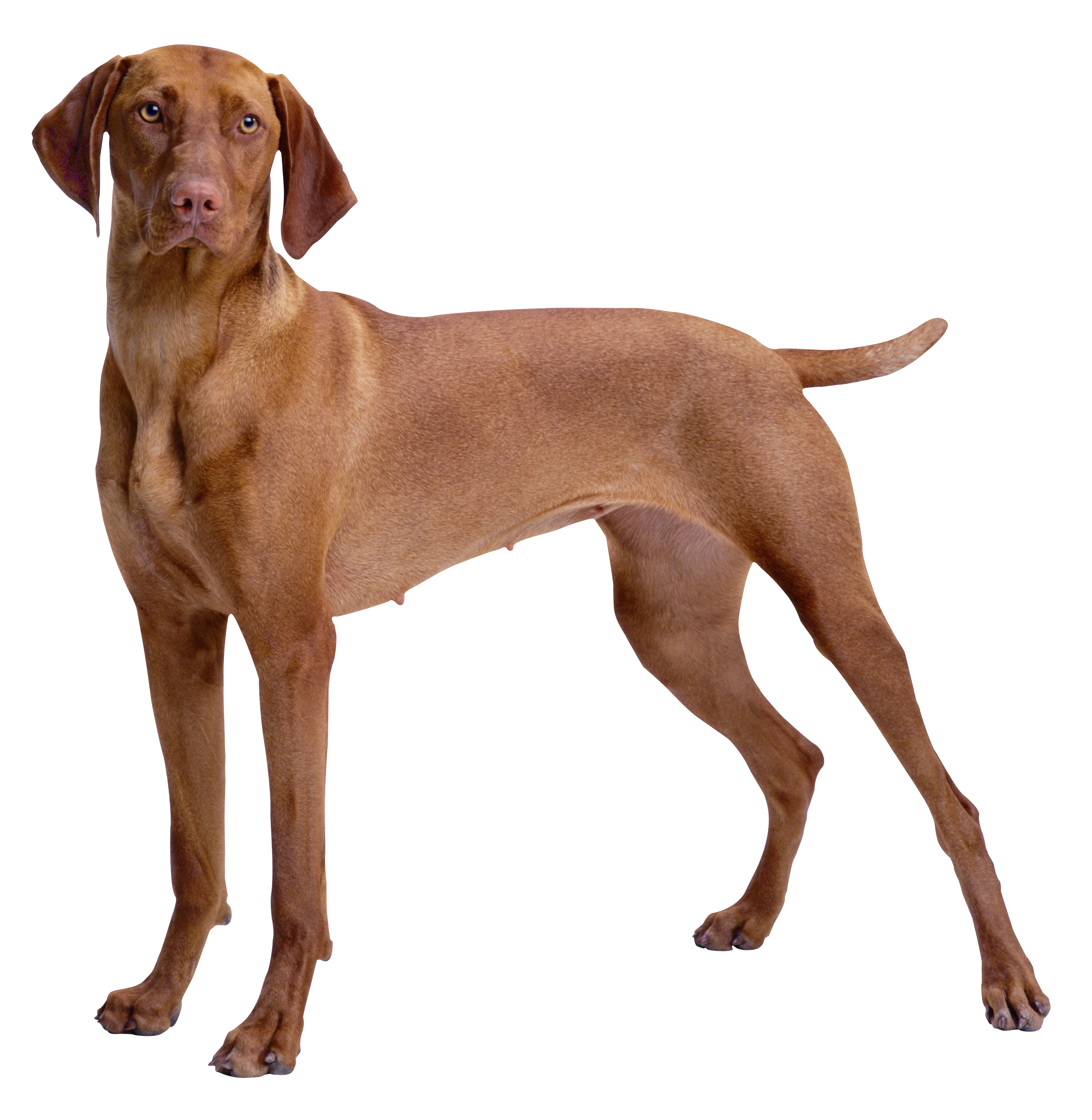 dogs will be dogs Your dog's online owners manual, featuring articles about breed information, dog selection, training, grooming and care for dogs and puppies.