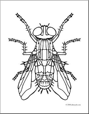 Clip Art Insects Housefly Coloring Page Abcteach Coloring Pages Art Clip Art