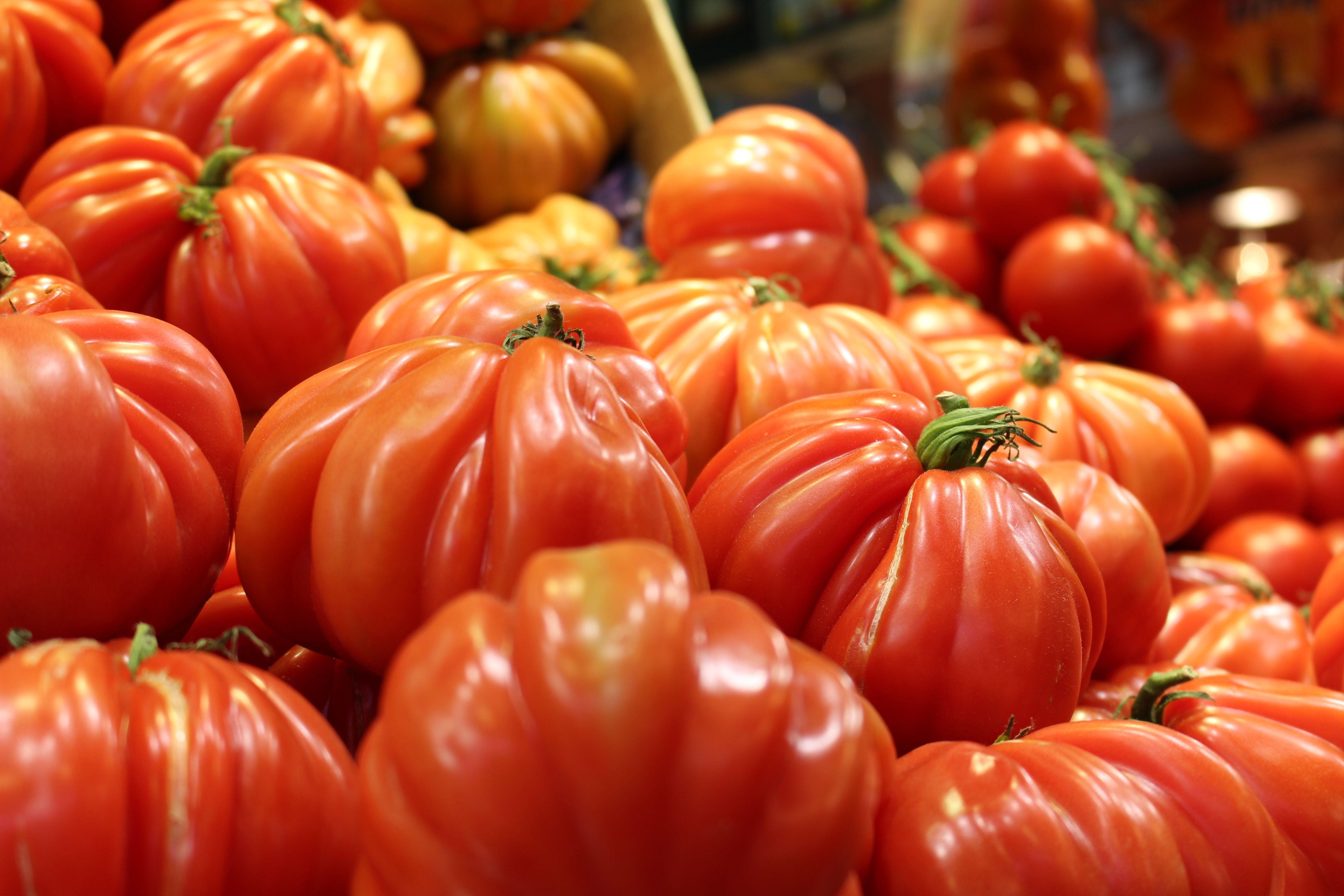 Tomates Corazón De Buey Tomate Verduras