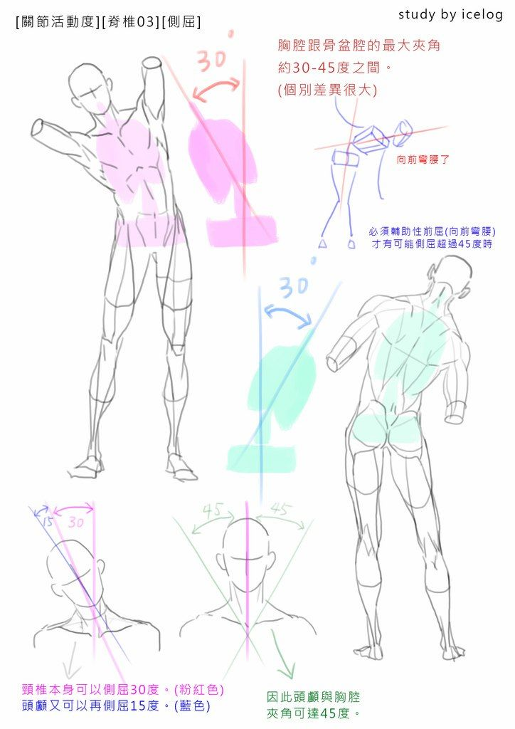 Pin By Loky On Anatomy Pinterest Anatomy Body Reference And