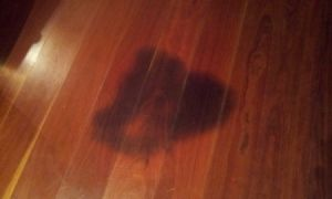 Pet Urine Stains From Hardwood Floors