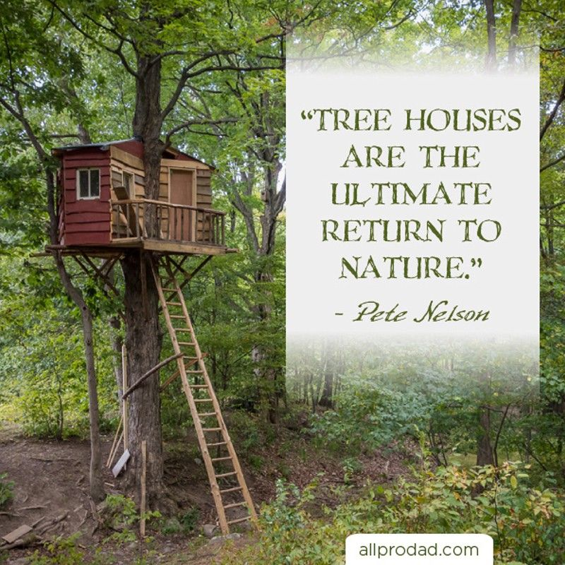 treehouse quotes
