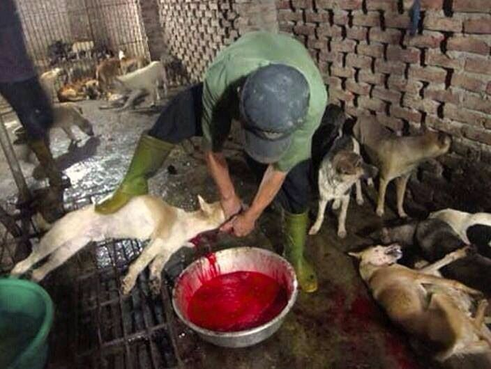 Dog Slaughterhouse | www.pixshark.com - Images Galleries ... - photo#45
