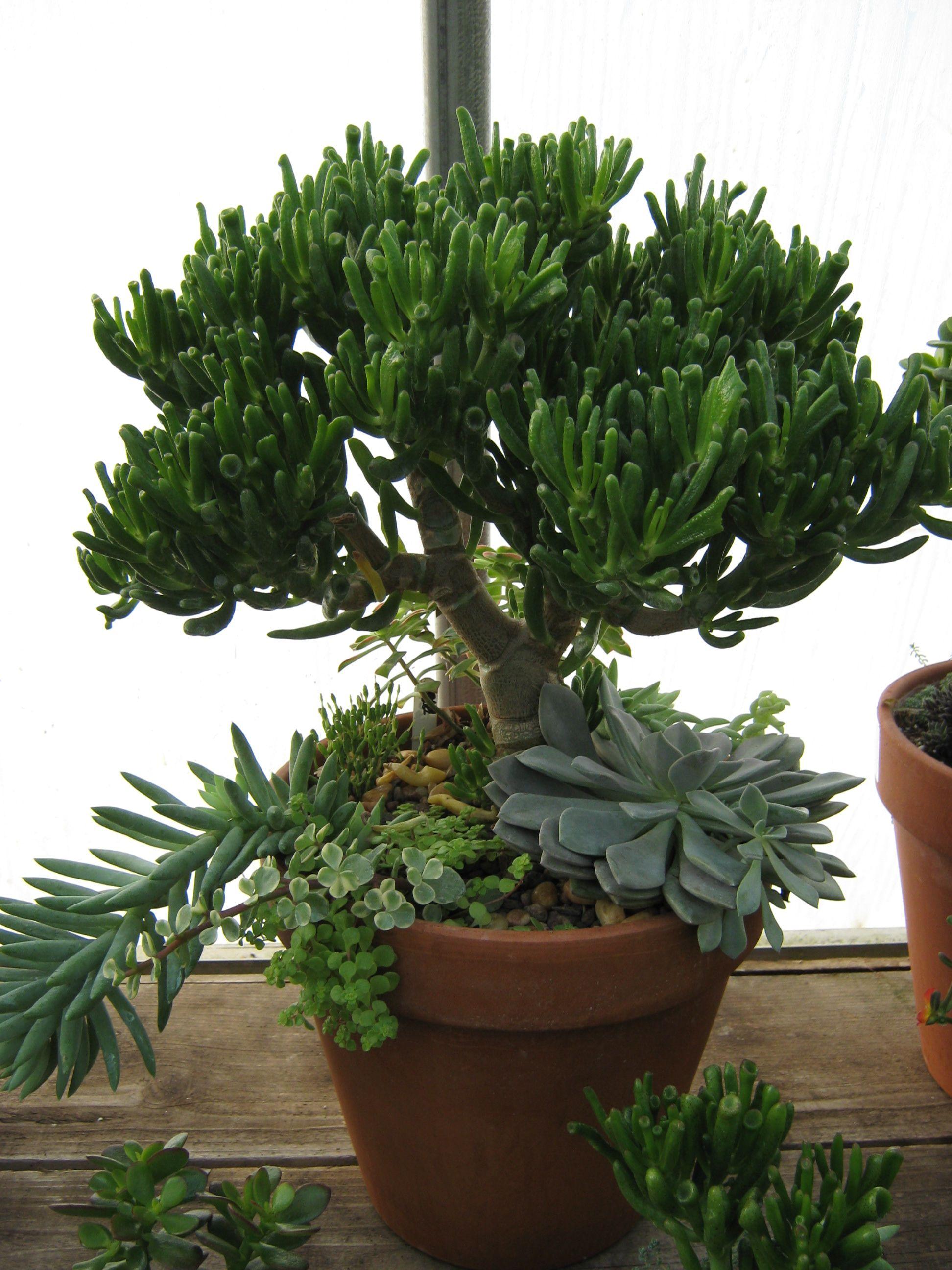 succulent pot jardin d 39 int rieur d co culture. Black Bedroom Furniture Sets. Home Design Ideas