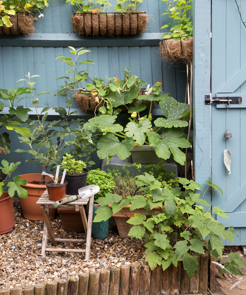 How to restore your garden after the cold winter – Winter garden