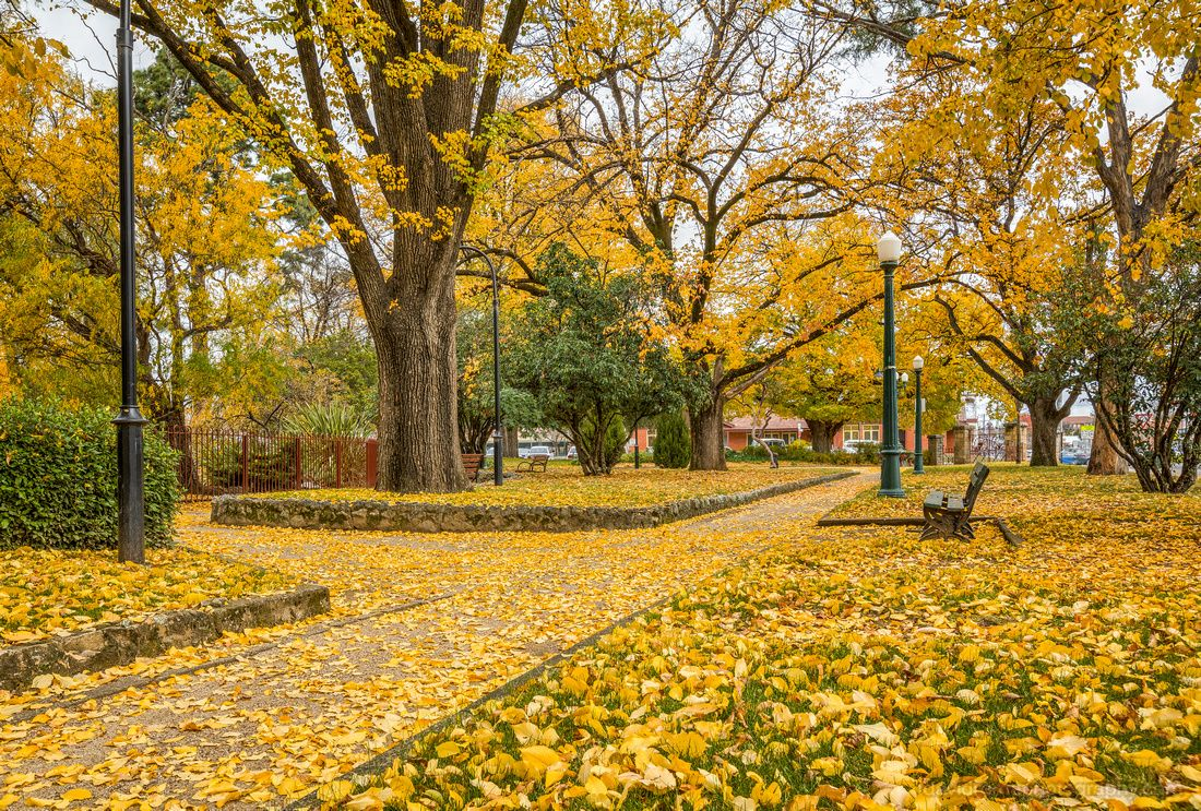 Autumn In Full Swing Machattie Park Bathurst Nsw Australia