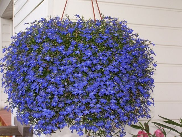 Hanging baskets, containers and flower pouches add a whole new dimension to gardening, helping to utilize all the available space. With hanging baskets and flower pouches you can brighten up a sunn… #containergardeningideashangingbaskets