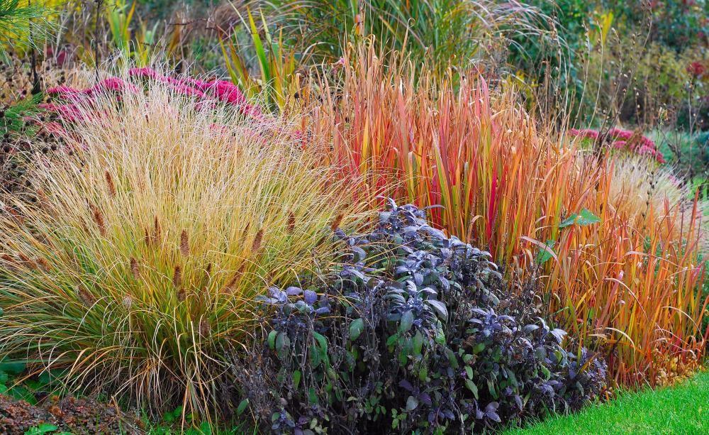 Diese Ziergraser Sorgen Im Herbst Fur Farbe Garten Gras Pflanzen