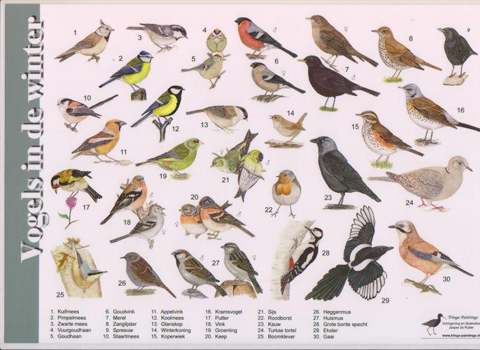 Goede Montessori afbeelding vogel - Google zoeken | Vogels, Vogel thema WV-16