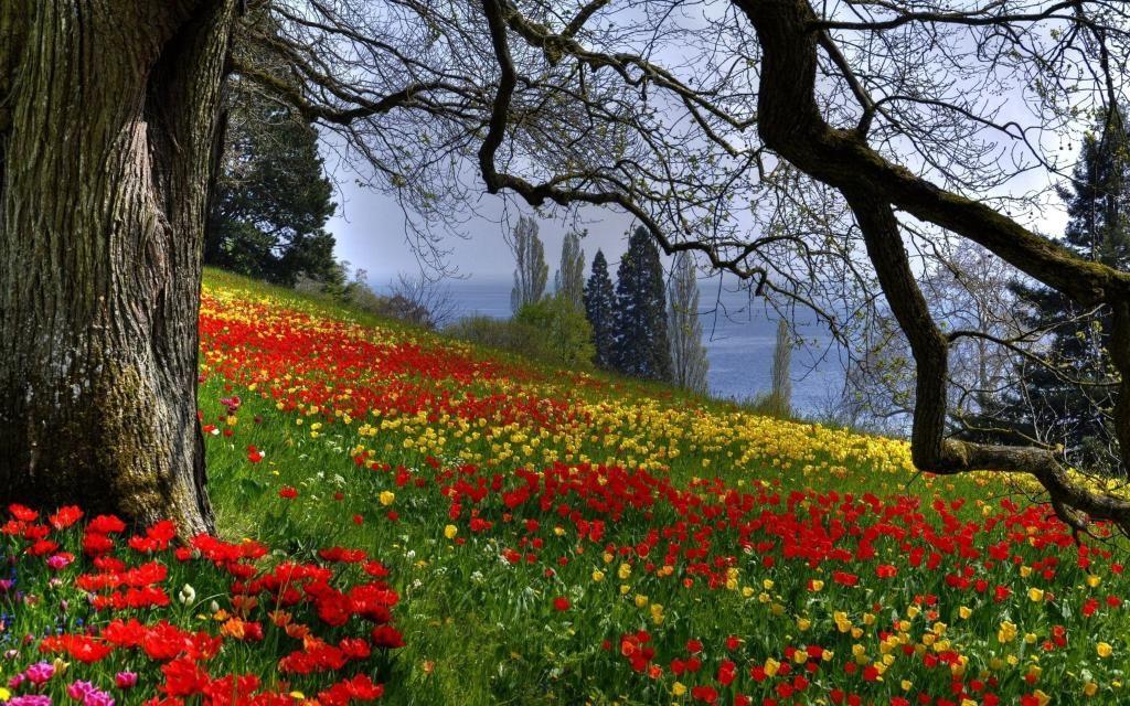Aleksandra Sokolova On Twitter Beautiful Forest Nature Wallpaper Spring Wallpaper Garden flower wallpaper hd nature