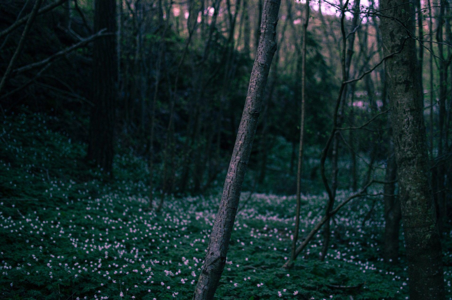 Bosque, árboles, Flores, Follaje, Alba, Amanecer, Hierba