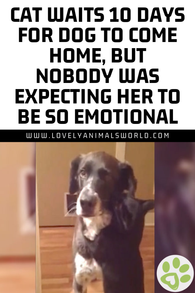 Cat Waits 10 Days For Dog To Come Home But Nobody Was Expecting Her To Be So Emotional Dogs Puppy Puppies Cats Kitten With Images Dogs Silly Dogs Animals