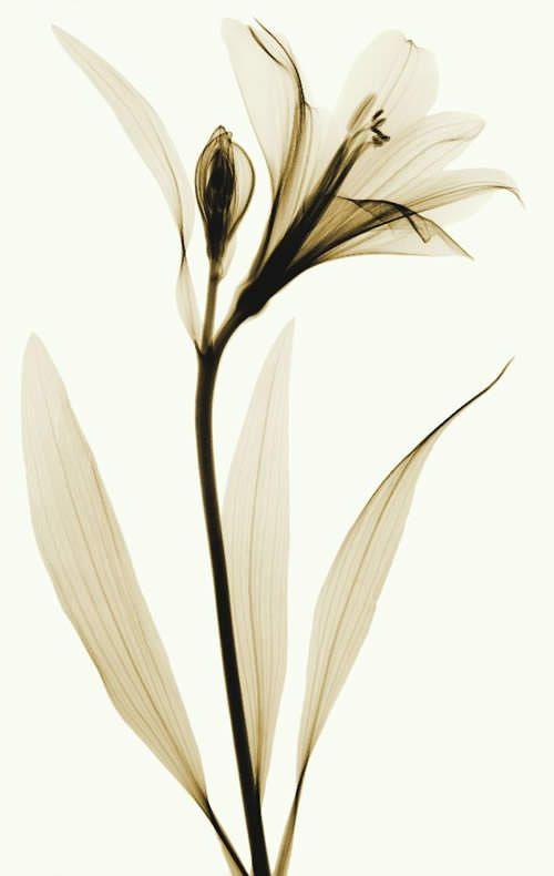 Vinils | idees de vinils | Pinterest | Flores, Rayo y Acuarela