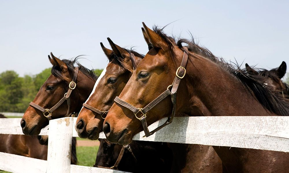 5 Facts About Thoroughbred Horses That You Never Knew