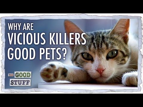 Why Do Vicious Killers Make Good Pets Youtube Pets Cat Fails Unusual Animals