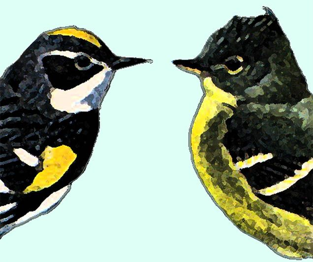 birdskissing