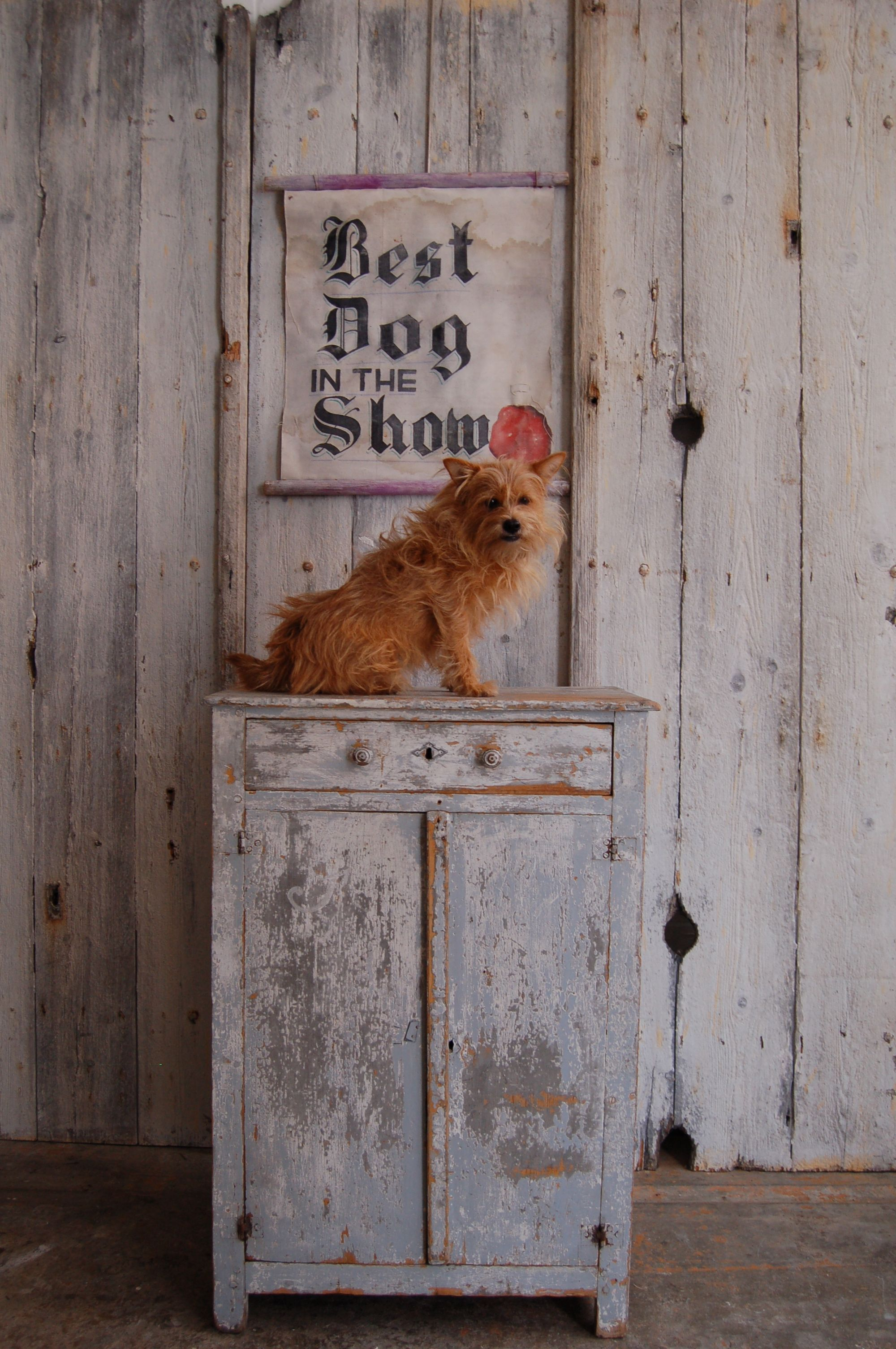 Cupboard banner dog not for sale antiques