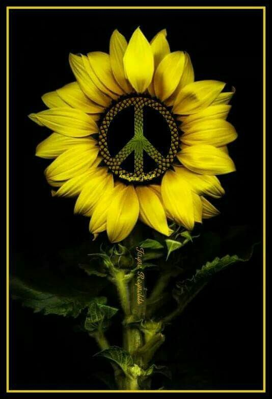 Pin by Lucretia Angert on hippie art   Sunflower pictures ...