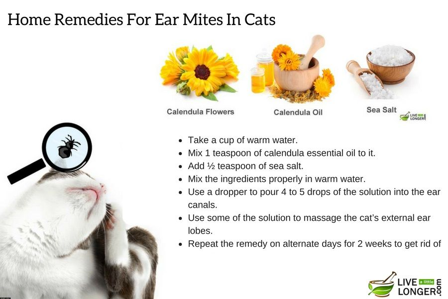 Use Natural Home Remedies Like Calendula Ear Drops To Stop Ear Mites In Cats Home Remedies Remedies Natural Home Remedies