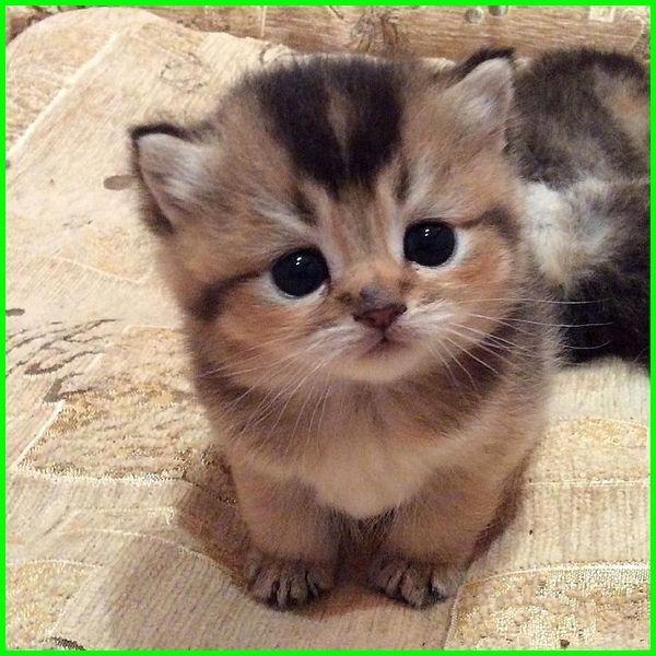 Gambar Kucing Lucu Imut Dan Paling Menggemaskan Sedunia Cute Kittens Gambar Kucing Lucu Kucing