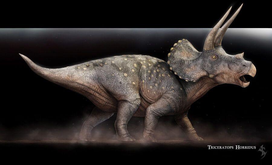 Vlad Konstantinov || Triceratopos || http://swordlord3d.deviantart.com/ || 3D modelling #illustrations #character design #animation