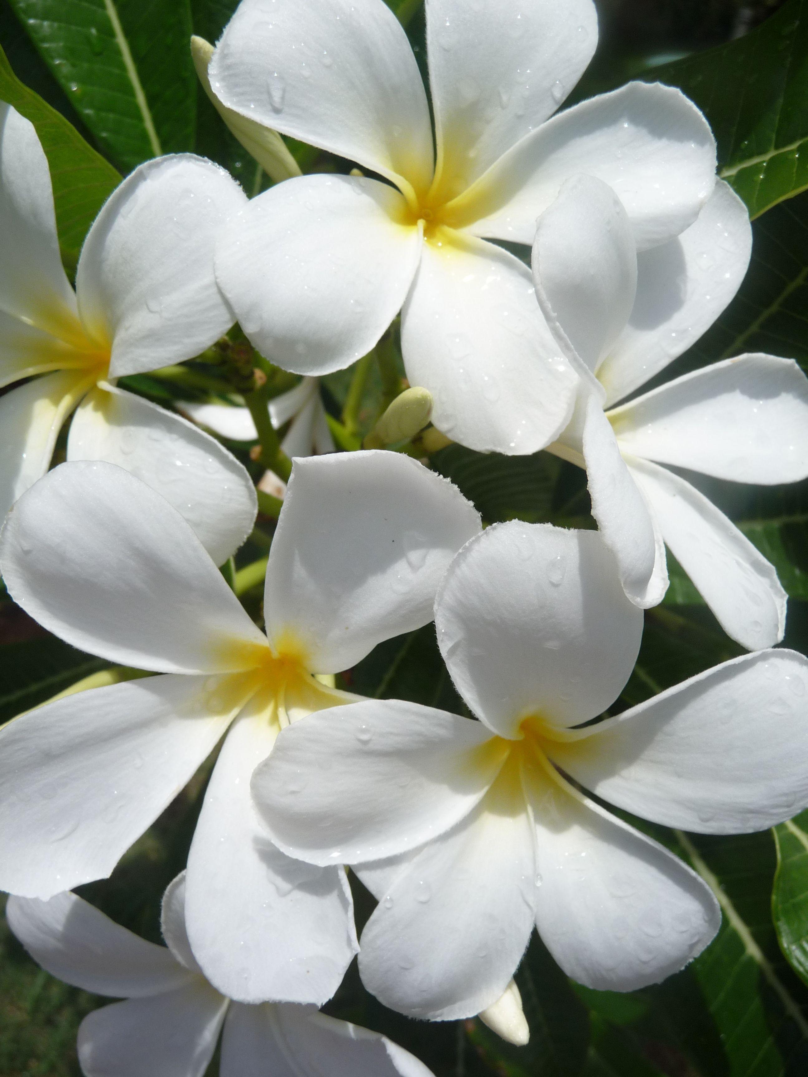 Flowers in Kauai, Hawaii    Photo by M.Zekulin