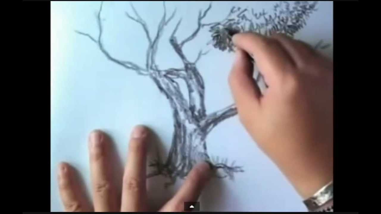 how to draw trees step by step how to draw realistic trees plants bushes and rocks. Black Bedroom Furniture Sets. Home Design Ideas