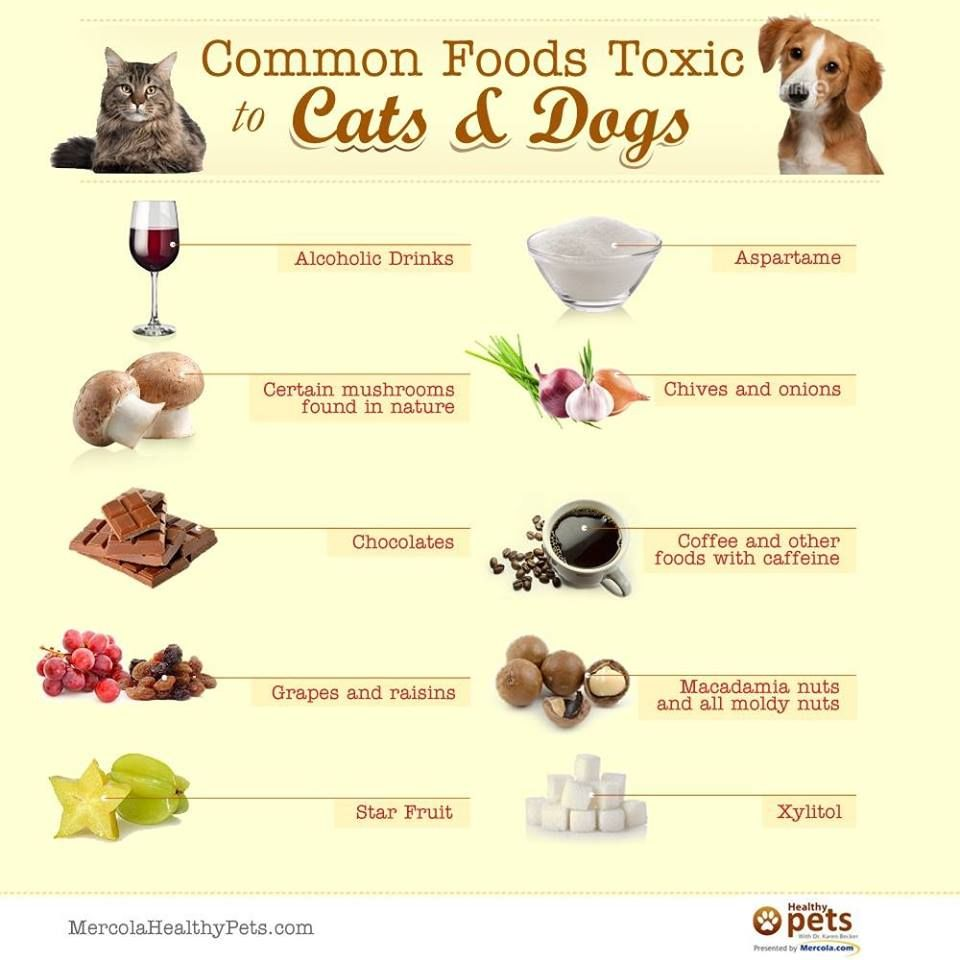Common Foods Toxic To Cats And Dogs Foods Bad For Dogs