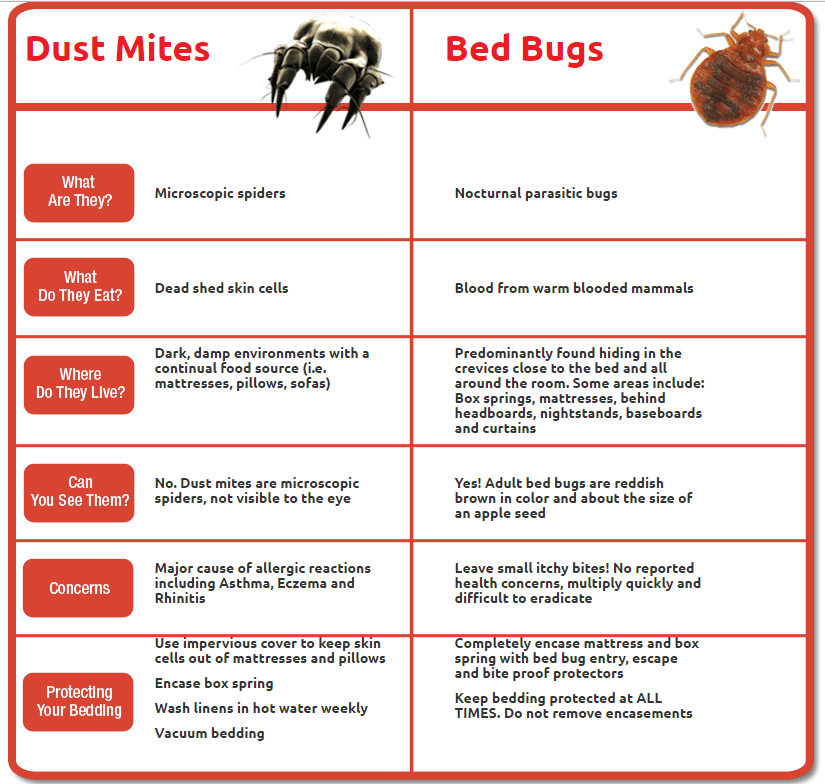 Dust Mites Versus Bed Bugs When In Doubt Scope It Out Bed Bug