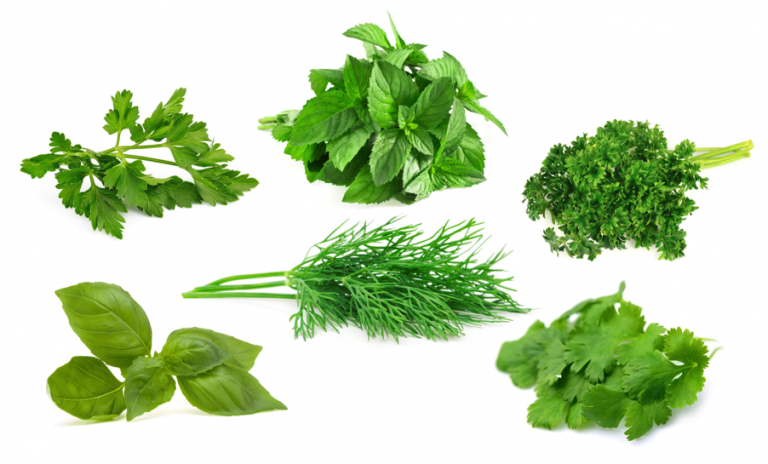 Herbs - Produce Made Simple