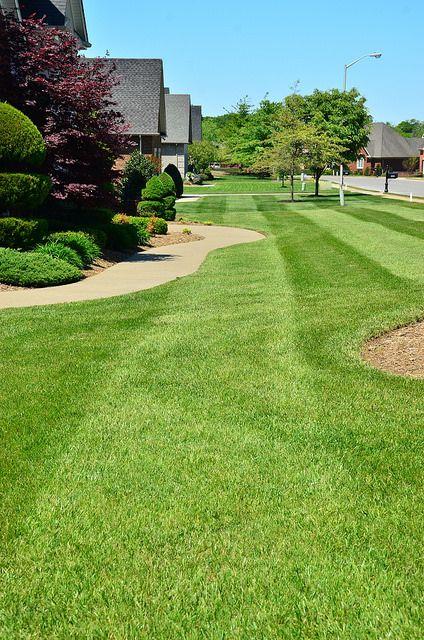 prolandscaper lawncare greenpal landscaping gardening atlantaprolandscaper lawncare greenpal landscaping gardening atlanta lawn care, lawn services tampa, nashville lawn care, lawn services nashville tn,